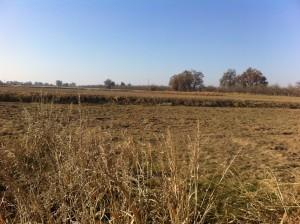 The future site of ImMODO's Farmersville solar project
