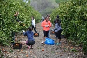 Harvesting Hope participants at work.