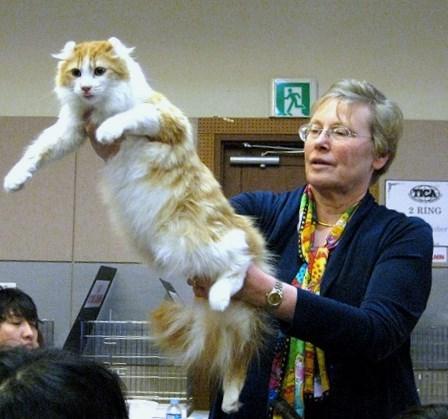 realistic fake cat