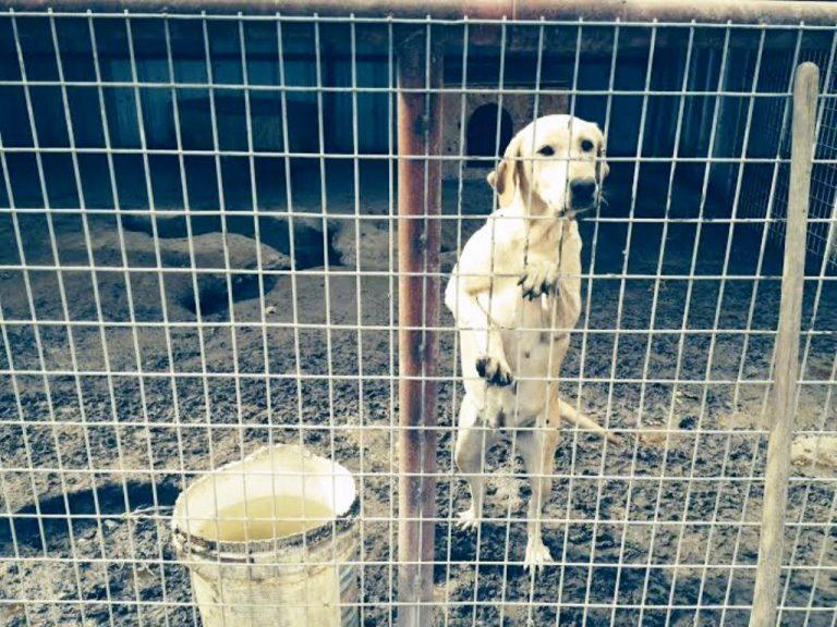 Top Dog Kennel accused of being a puppy mill - Valley Voice